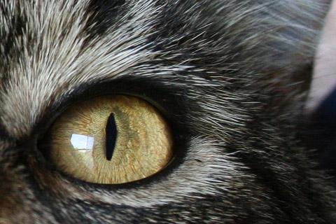 cat_eye.jpg